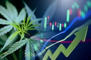 Marijuana Stocks on the Move