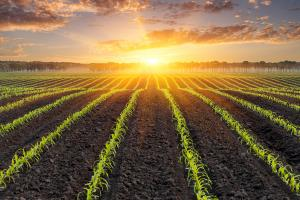 How to Invest for the Coming Ag Supercycle
